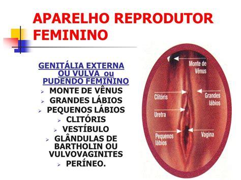 vestibulo feminino conte 218 do 02 anatomia e fisiologia da reprodu 199 195 o humana