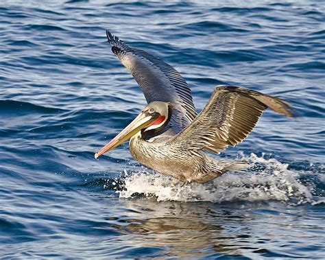 pelican boat material teaching elementary science just another weblog