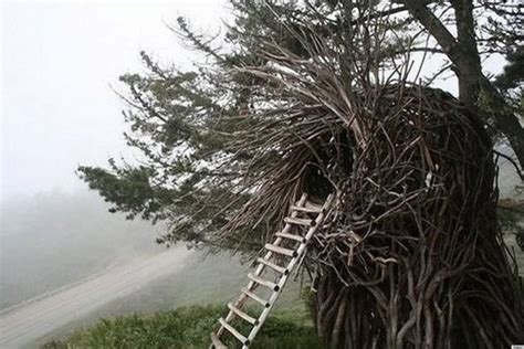 a human nest is one way to save on accommodation photos