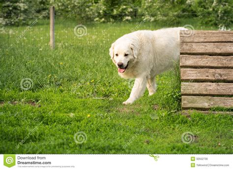 dog in the backyard cute dog in the yard stock photo image 32552730