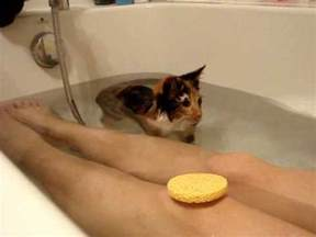 why do cats like bathtubs honda cat taking a bath youtube