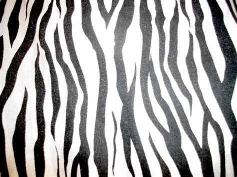 zebra print by monstergorawr on deviantart