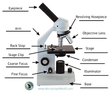 microscope with labeling the parts of the microscopes including free printouts