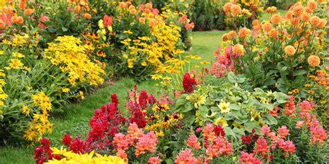 flowers that bloom in fall 25 best fall flowers plants flowers that bloom in autumn