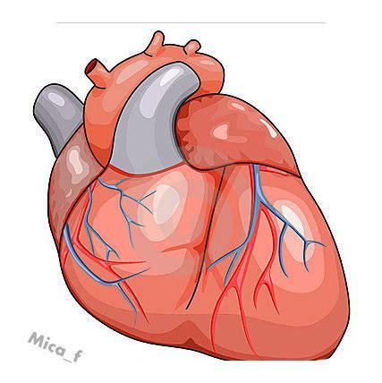 Imagenes De Corazones Organo | resultado de imagen para imagenes de corazon organo