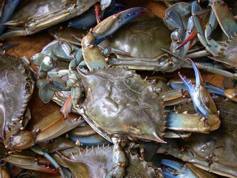 Pakan Organik Udang pakan ikan bandeng udang sempurna pakan ikan bandeng