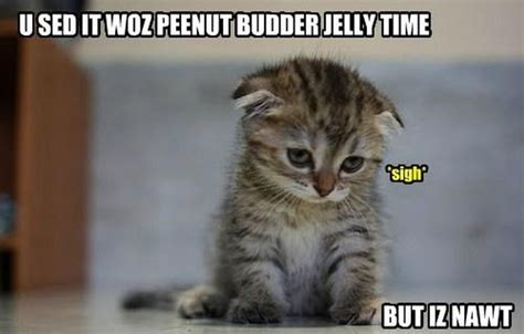 Cute Kitty Meme - 301 moved permanently