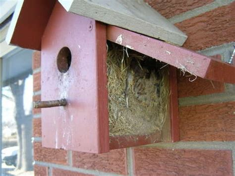 1000 images about birds and birdhouses on pinterest