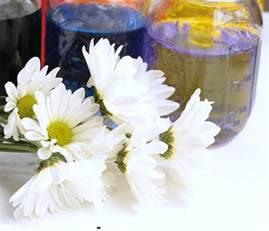 color changing flowers color changing flowers science experiment