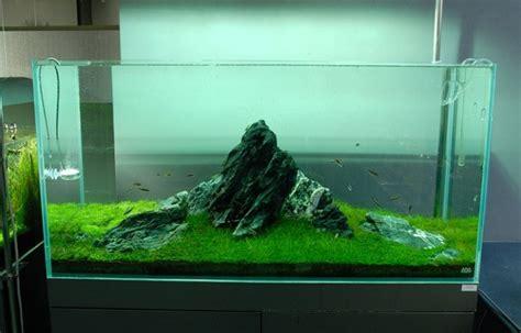 amano aquascaping nature aquariums and aquascaping inspiration