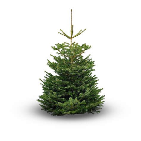 where to buy real christmas trees in and around glasgow