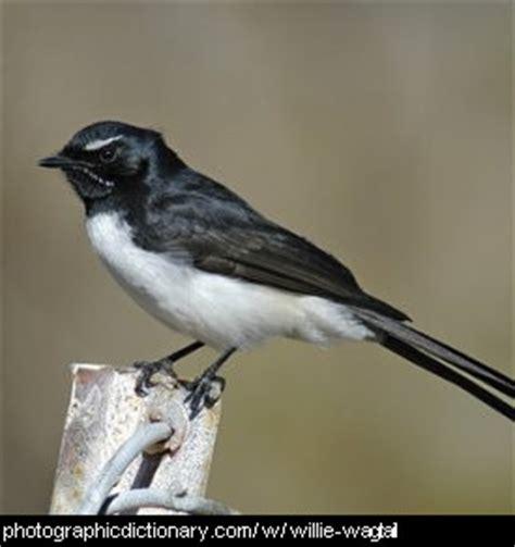 birds that start with w