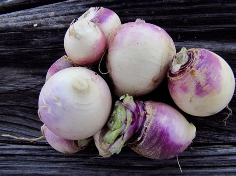vegetables i can plant now 15 vegetables you can plant now for fall harvest hgtv