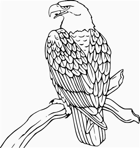 realistic eagle coloring pages free realistic birds coloring pages