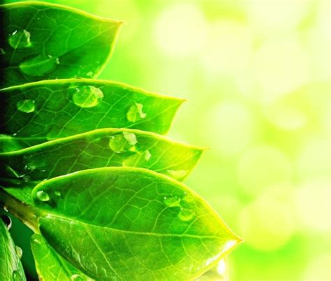wallpaper daun mint aesthetic green natural 05 hd picture free stock photos in