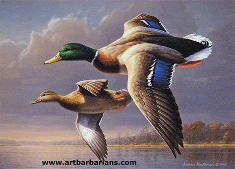 mallard duck tattoo mallard duck ideas