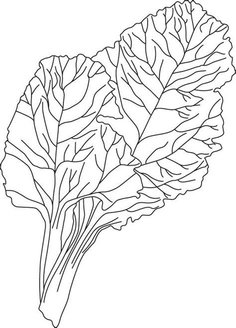 lettuce leaf coloring page vegetables onion coloring page 5 lettuce leaf coloring page