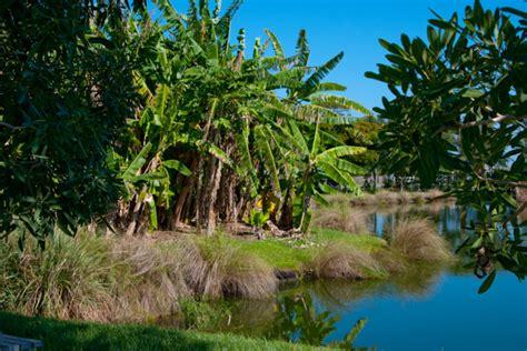 Palma Sola Botanical Gardens Palma Sola Botanical Park Florida Hikes
