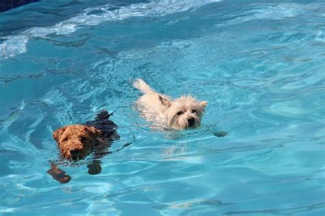puppies swimming adventure ranch tucson alternative boarding