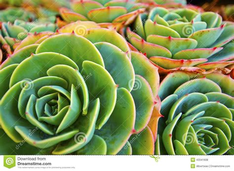 patterns in nature plants green succulent plant stock photo image 43341608