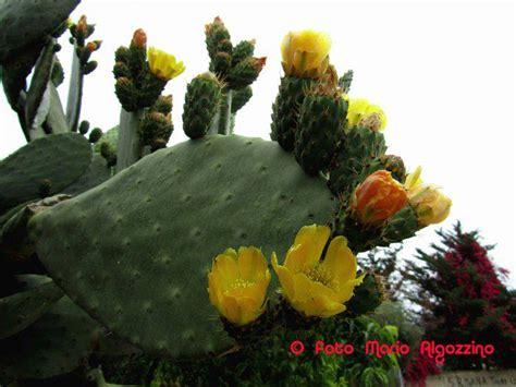 fiore di fichidindia come si viveva usi modi e rimedi vivere antico in