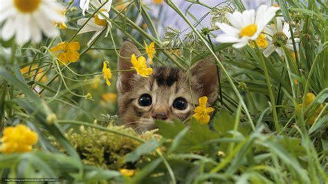 imagenes de jardines con gatos 10 hermosas im 225 genes de gatitos con flores para fondo de