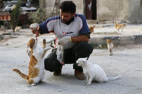 Syria Pet meet the who stays in syria to care for its abandoned cats care2 causes