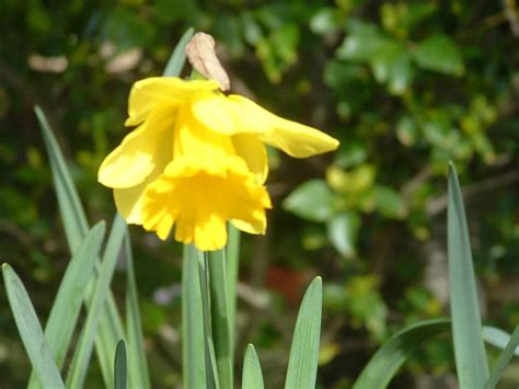 gardens galore how to plant and care for your flowering bulbs