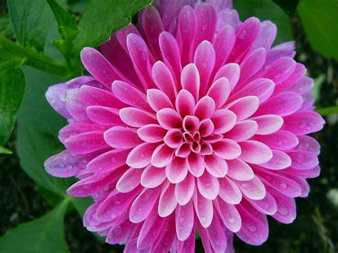 Schöne by Die 72 Besten Lila Blumen Hintergrundbilder