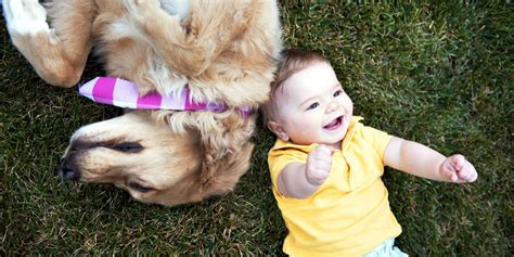 dogs and humans dogs experience emotions just like humans new research says huffpost