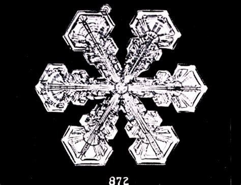 snowflake wilson bentley the first snowflake photographs