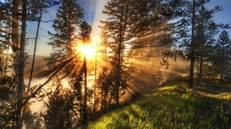 Bilder Zu Herbst 5640 by Sonnenlicht Im Wald 1920x1200 Hd Hintergrundbilder Hd Bild