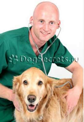 ascites in dogs treadmill for dogs