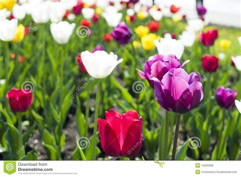 beautiful spring flowers beautiful spring flowers royalty free stock photos image
