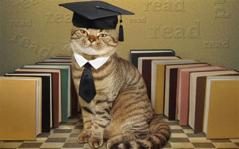 cat  graduation funny  wallpapers hd wallpapers