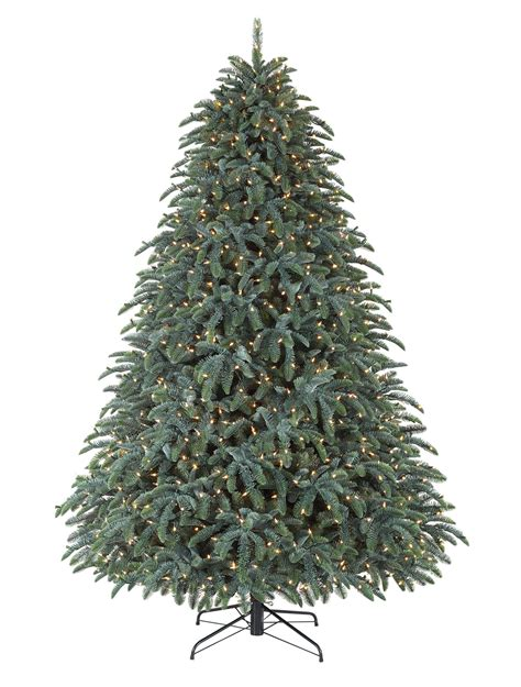 28 best fir trees in australia t6 new frasier fir tree