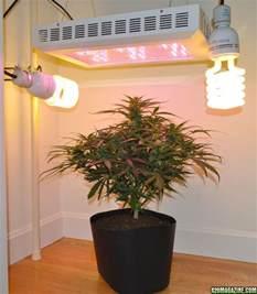 300w Led Grow Light Testing New Led Lights Vs 1000w Hps Page 11