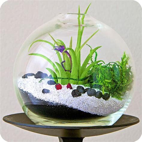 bathroom terrarium adorable air plant terrarium ideas