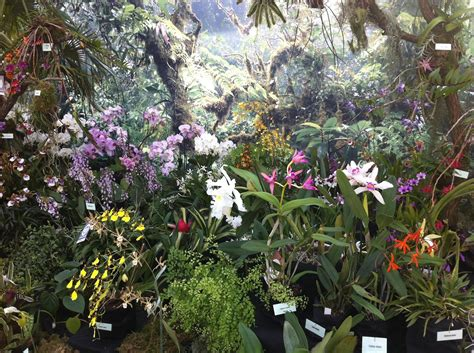 uni kiel botanischer garten orchideenschau im botanischen garten kiel reiselurch de