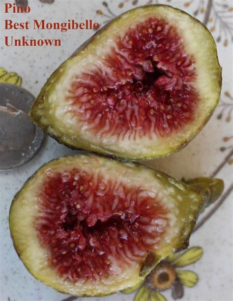 best fig who s got the ugliest fig in the world ourfigs