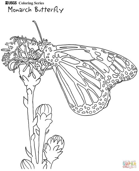 caterpillar and butterfly 2 coloring page supercoloring com printable page monarch butterfly coloring image coloring