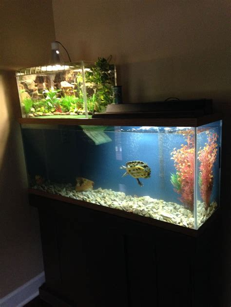 best 25 turtle tanks ideas on turtle