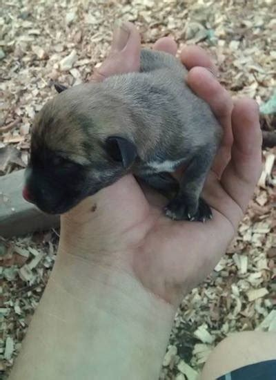 can you touch newborn puppies info free medium sized dogs wallpaper breeds picture