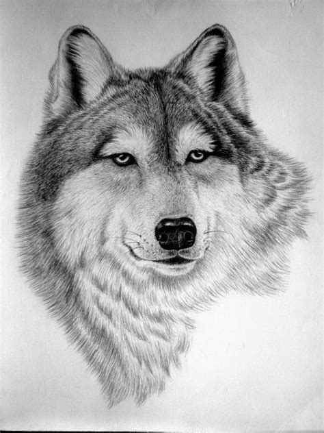 draw wild animal faces    art shows  license