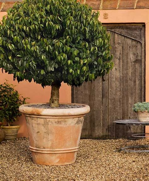 These Large Terracotta Planters Will Take Small Trees Large Terracotta Planters