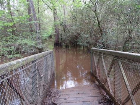 woodwardia picture of big thicket national preserve