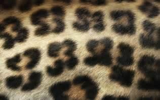 leopard print wallpaper for bedroom leopard print furniture for living room color ideas