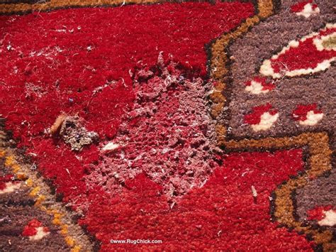 moths in rugs moths bugs and rugs what you need to rug