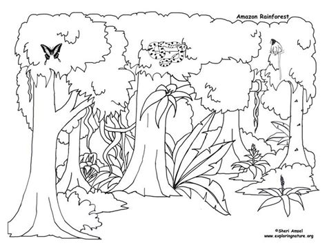 rainforest canopy coloring page amazon rain forest diorama background and animals girl
