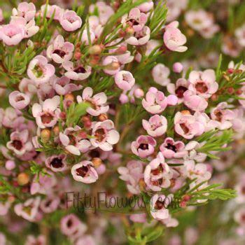 Fiftyflowers Com Light Pink Wax Flower All Wedding